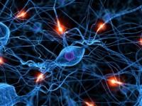 «GPS-система» мозга отслеживает местоположение и в покое